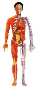 0001 human anatomy 2